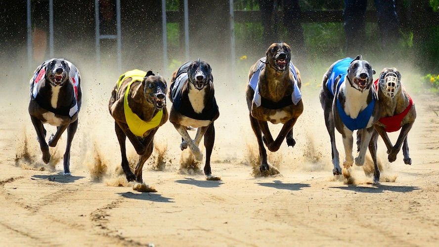 Betting Business - Tralee Greyhound SIS