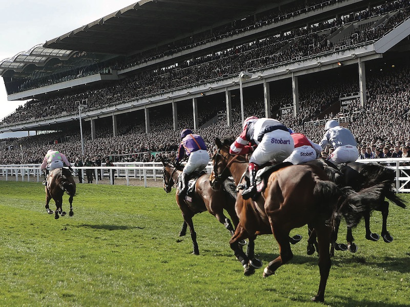 Betting Business - Cheltenham Festival bookmakers
