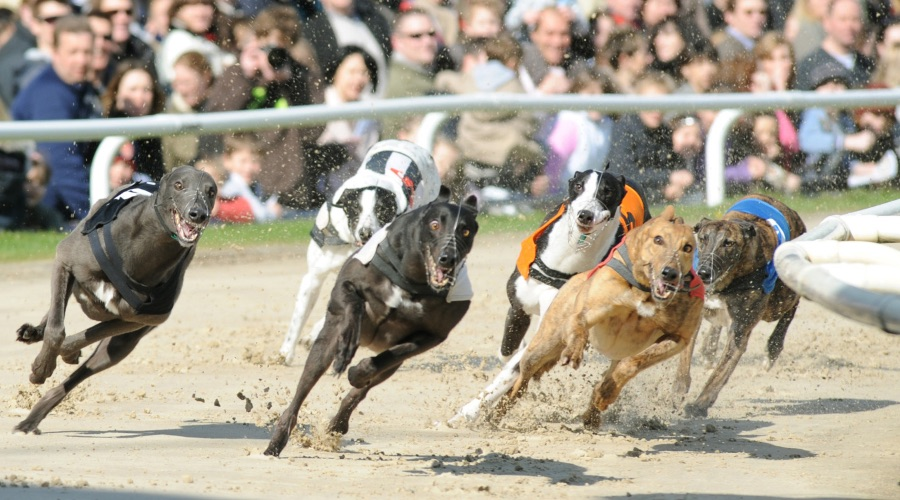 Betting Business - SIS Tabcorp Greyhound Australia deals vermantia