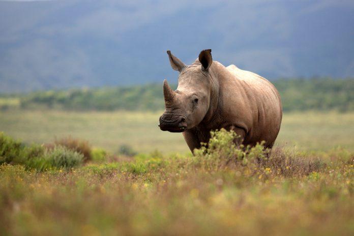 microgaming rhino charity