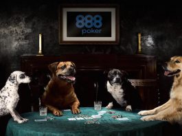 888 Poker Dogs Group – Full